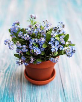 Vergissmeinnichtblumen im kleinen blumentopf