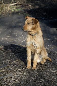 Verketteter hund in der nähe von holzzwinger, hund bewacht ein haus auf dem land
