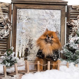 Verkleideter spitz, der auf brücke in einer winterlandschaft sitzt