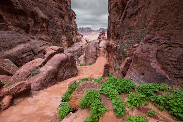 Verlassene berge von petra in jordanien und helles grün im frühjahr