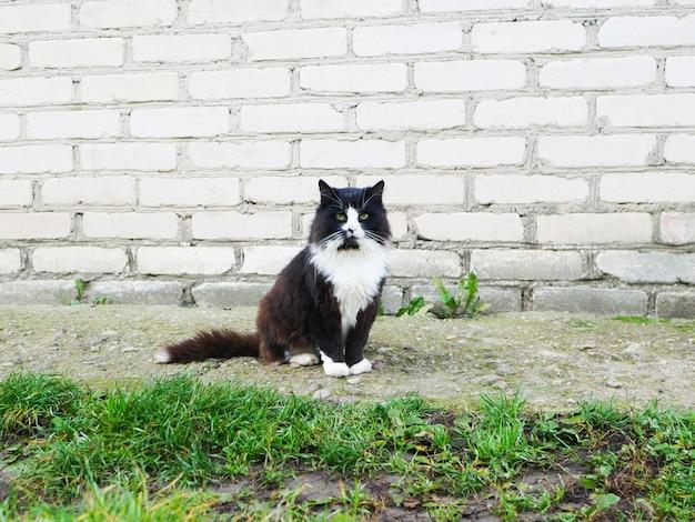 Verlassene katze. verlassene weinende katze mit bindehautentzündung. obdachlose tiere