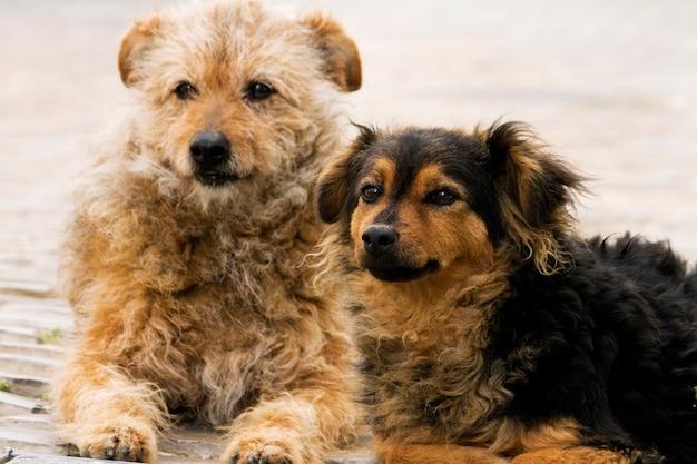 Verlassene straßenhunde