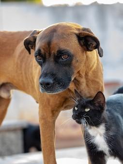 Verlassener gelber hund und schwarze katze interagieren freundlich
