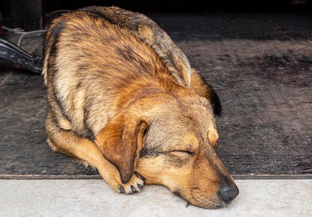 Verlassener hund, der auf dem boden liegt