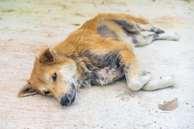 Verlassener obdachloser streunender hund ist ein aussätziger auf der straße