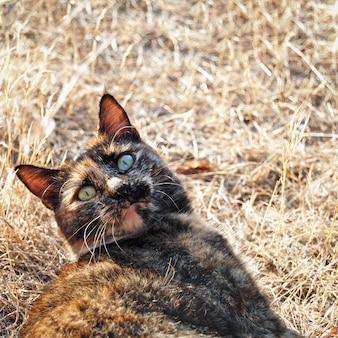 Verrückte katze im freien, die in die kamera schaut