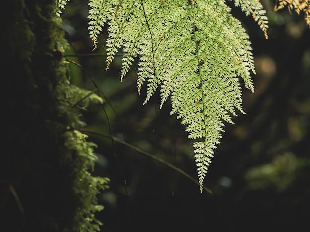 Verschiedene anlagen der nahaufnahme im regenwald