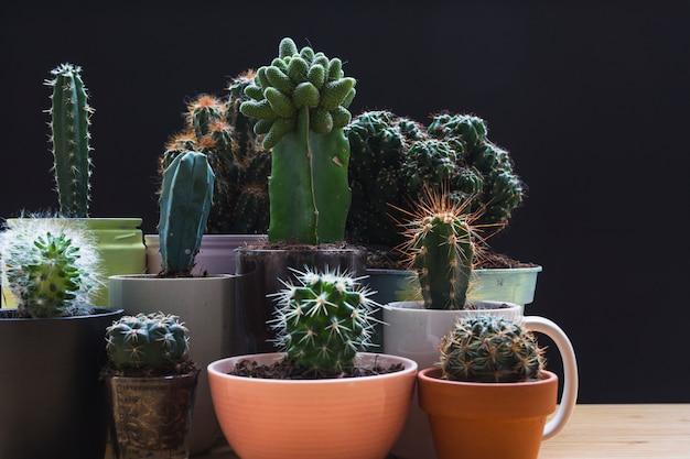 Verschiedene art von mini grünen saftigen hausbetriebstöpfen gegen schwarzen hintergrund