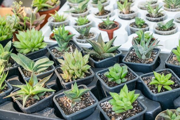 Verschiedene arten sukkulenter kaktuspflanzen