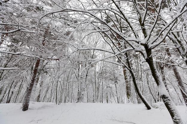 Verschiedene arten von laubbäumen ohne laub in der wintersaison, schneebedeckte bäume nach schneefällen und schneestürme in der wintersaison