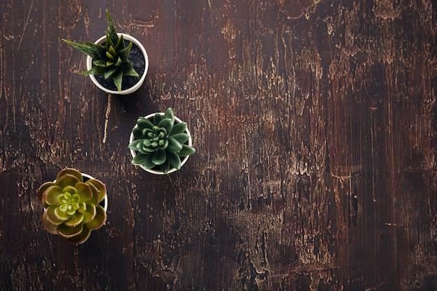 Verschiedene arten von saftigen zimmerpflanzen von echeveria havortia in tontöpfen, skandinavische hipster-heimdekoration