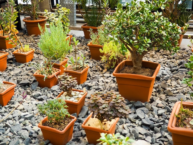 Verschiedene bonsaibäume wurden in töpfe gepflanzt und viele zur dekoration im öffentlichen garten sortiert.