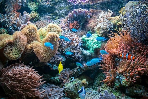Verschiedene bunte fische yellow tang clownfisch ctenochaetus tominiensis flame angelfish