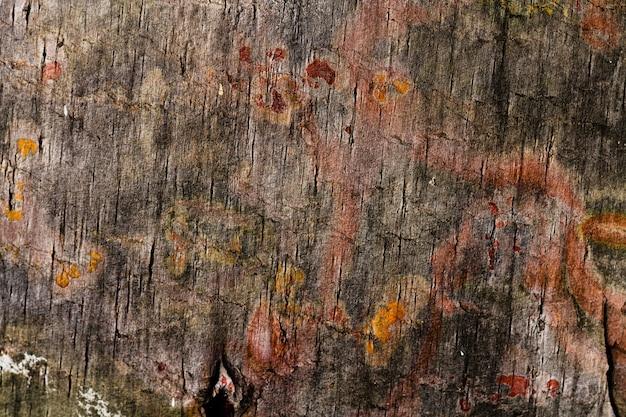 Verschiedene farben des baums mit exemplarplatz