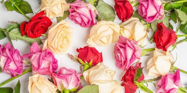 Verschiedene frische mehrfarbige rosen isoliert auf weißer oberfläche