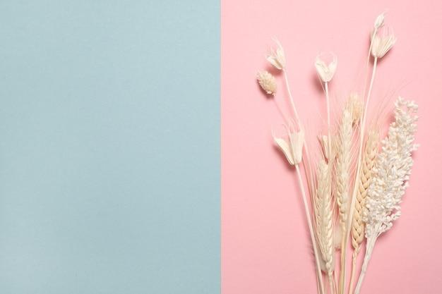 Verschiedene gelbe getrocknete wildblumen auf rosa und blauem tisch mit kopienraum. draufsicht