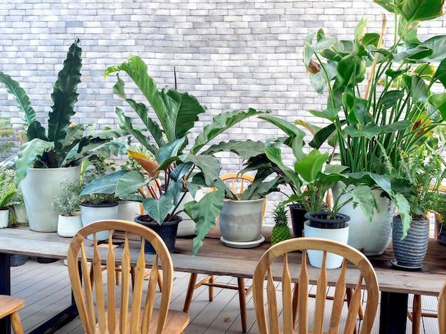Verschiedene grüne blätter, pflanzen in töpfen dekoration auf holzesstisch mit holzstühlen vor der modernen weißen backsteinmauer.