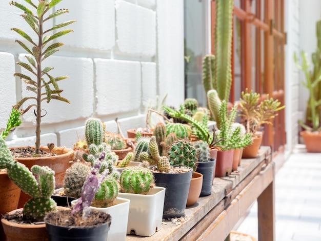 Verschiedene grüne kaktuspflanzen in töpfen.