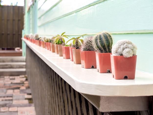 Verschiedene kaktuspflanzen in vielen plastiktöpfen standen auf einem weißen holzregal