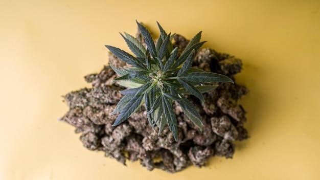Verschiedene medizinische unkrautpflanzen in gelbem hintergrund