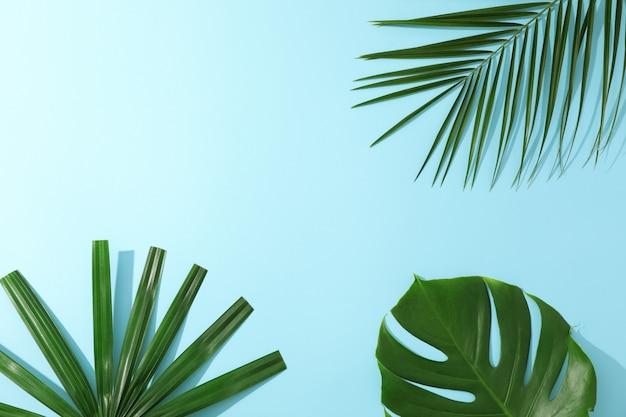 Verschiedene palmblätter auf blauem tisch