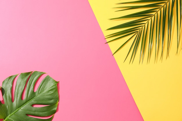 Verschiedene palmblätter auf zweifarbigem tisch