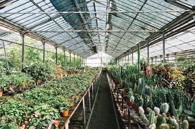 Verschiedene pflanzen, die im gewächshaus wachsen