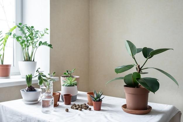 Verschiedene pflanzen in verschiedenen töpfen auf dem tisch. innengartenhaus. grüner garten im zimmer