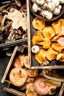 Verschiedene pilze in einer kiste. auf einem rustikalen hintergrund.