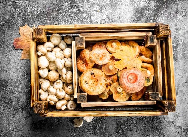 Verschiedene pilze in einer kiste