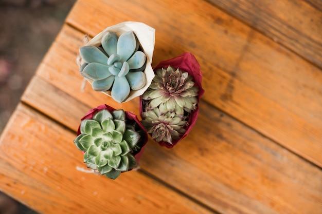 Verschiedene succulents und kaktus in den töpfen auf dunklem holztisch. draufsicht, hintergrund