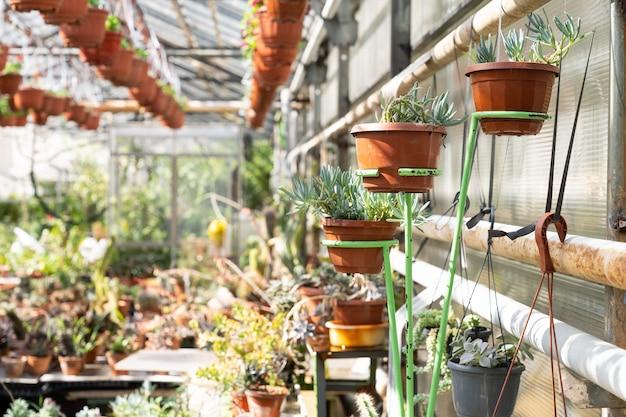 Verschiedene sukkulenten wachsen im gewächshaus mit exotischen pflanzen orangerie oder kaktusgärtnerei des gewächshauses