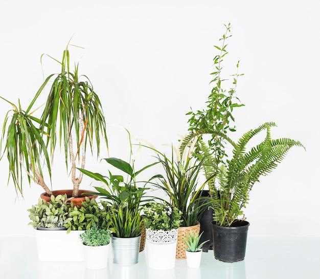 Verschiedene topfpflanzen angeordnet auf reflektierendem schreibtisch