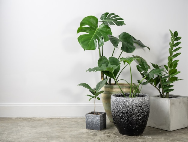 Verschiedene zimmerpflanzen in modernen stilvollen behältern auf zementboden in der natürlichen luft des weißen raums reinigen