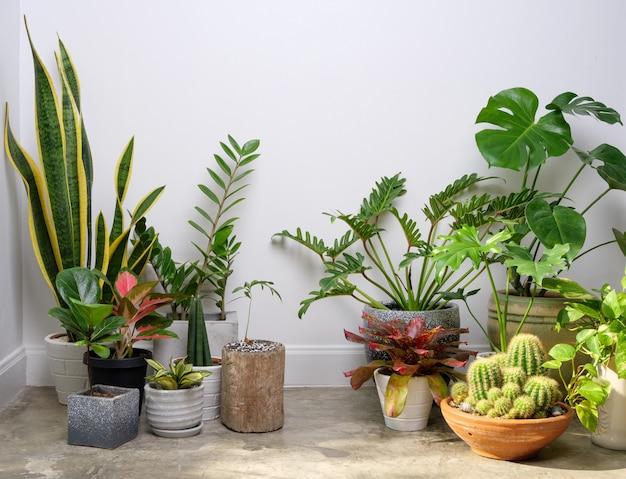 Verschiedene zimmerpflanzen in modernen stilvollen behältern auf zementboden in weißer raum natürlicher luft reinigen mit monstera philodendron palme, zamioculcas zamifolia ficus lyrata mit kopierraum