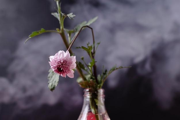 Verschmutzungskonzept mit erstickter pflanze