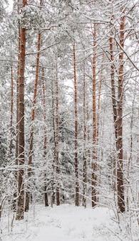 Verschneiter winterwald schneebedeckte äste bäume und büsche