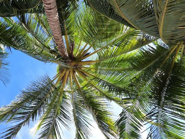 Verschwommene kokospalmen mit klarem himmel im sommerferienkonzept