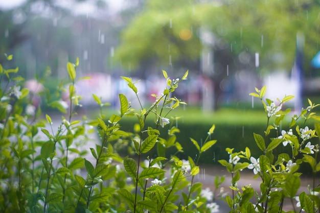 Verschwommene schöne blumen, die im frühling am regentag während der regenzeit blühen. bokeh verwischen hintergrund im garten.