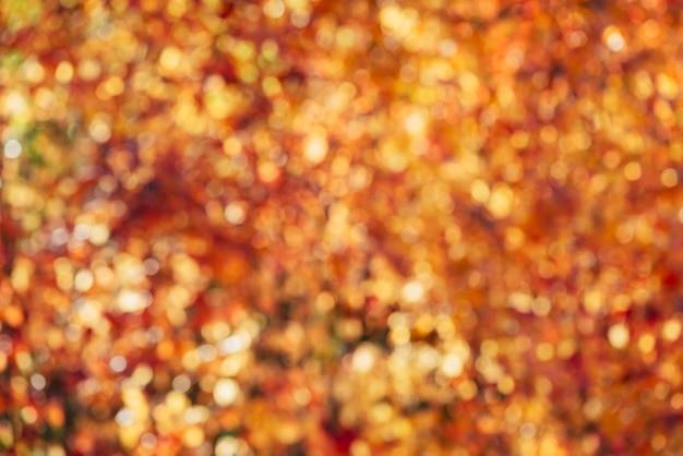 Verschwommene textur von üppigem, buntem laub. defokussierter naturherbsthintergrund im sonnenuntergang. verschwommener natürlicher herbsthintergrund im sonnenaufgang. mehrfarbiges bokeh. gelb-orange-rote herbstpalette in der goldenen stunde.