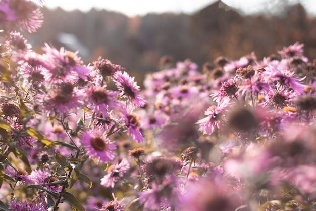 Verschwommener abstrakter hintergrund mit rosa blumen auf blauem himmel mit sonne