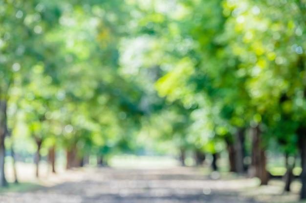 Verschwommener grüner park in der stadt für erfrischenden grünen naturweg in gartengrünbäumen unter waldnatur