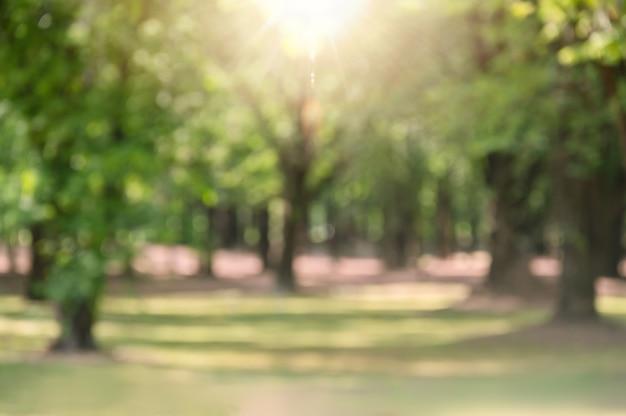 Verschwommener grüner park in der stadt mit sonnenstrahl für erfrischenden grünen naturweg in gartengrünbäumen unter waldnatur