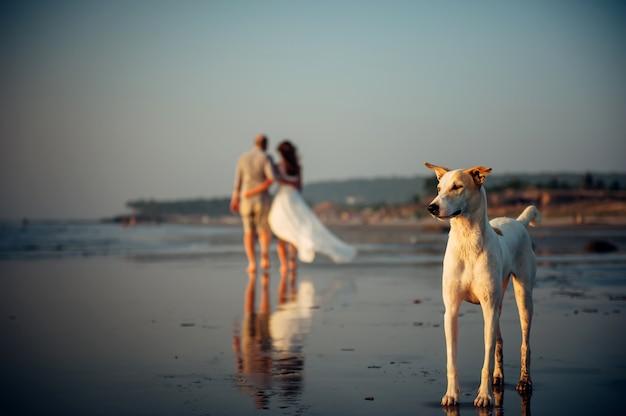 Verschwommenes bild des glücklichen paares, das auf dem strand geht. im vordergrund steht ein hund im sand. mann und frau in einer umarmung werden entlang der küste entfernt. urlaubskonzept