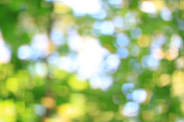 Verschwommenes bild von grünem frühlingslaub hautnah