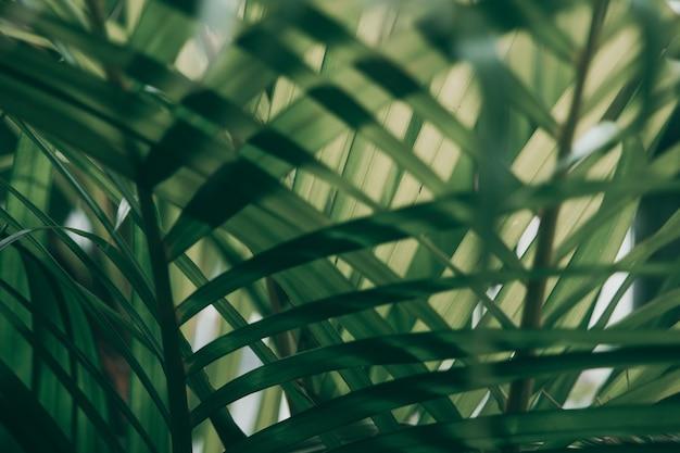 Verschwommenes tropisches grünes blatt außerhalb des fensters, dunkler ton