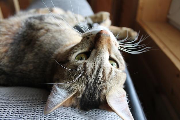 Verspielte katze schaut in die kamera