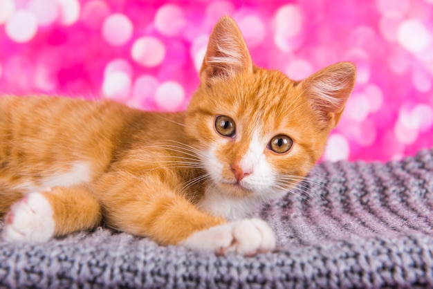Verspieltes und lustiges süßes rotes kätzchen auf rosa hintergrund