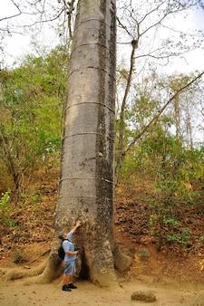 Versteinerter puyango-wald