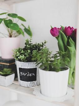 Vertikale ansicht von pflanzen in töpfen und tulpen
